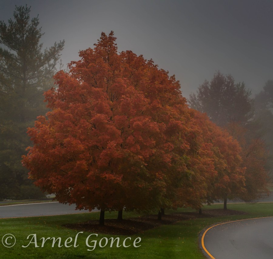 Glenmore Fall Trees