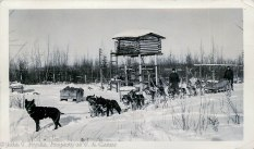 Dog Sled Team, Alaska